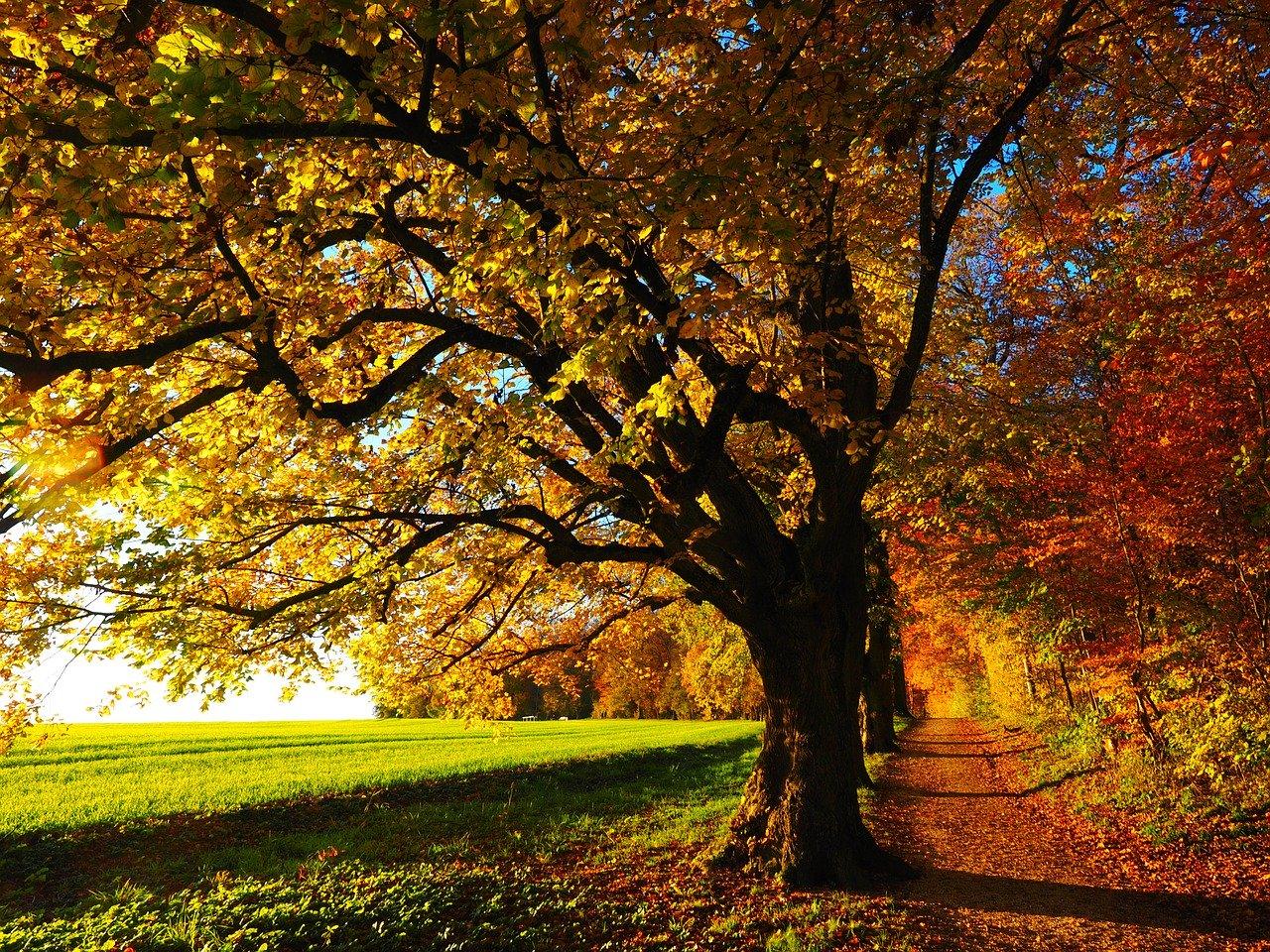 tree, avenue, backlighting